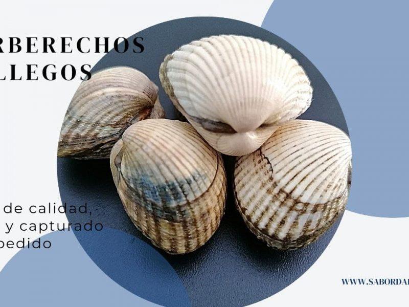 berberechos gallegos